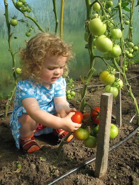 Pomidorowo mi…